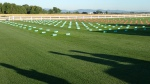 Grass plots